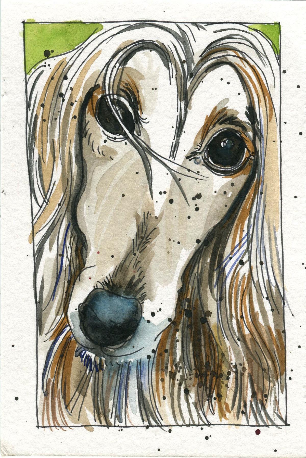 portrait-afghan-hound